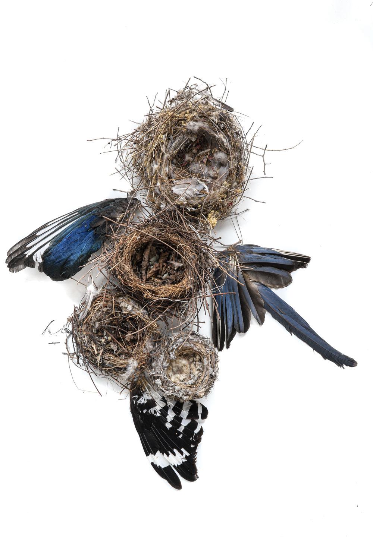 1374 plumas y nidos