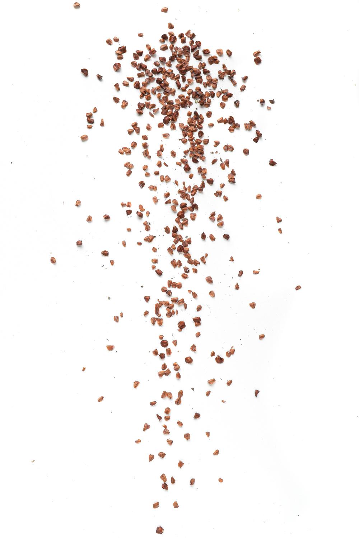 1387 semillas