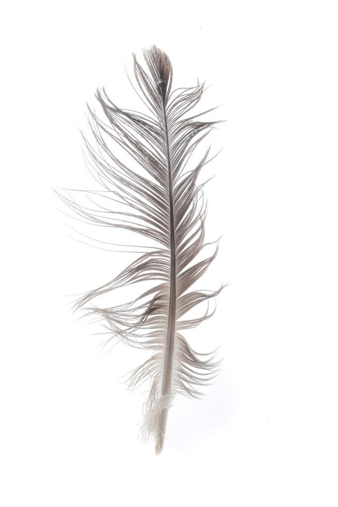 1413 pluma
