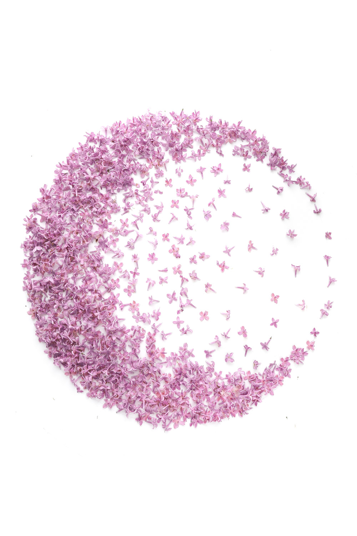 1422 lila