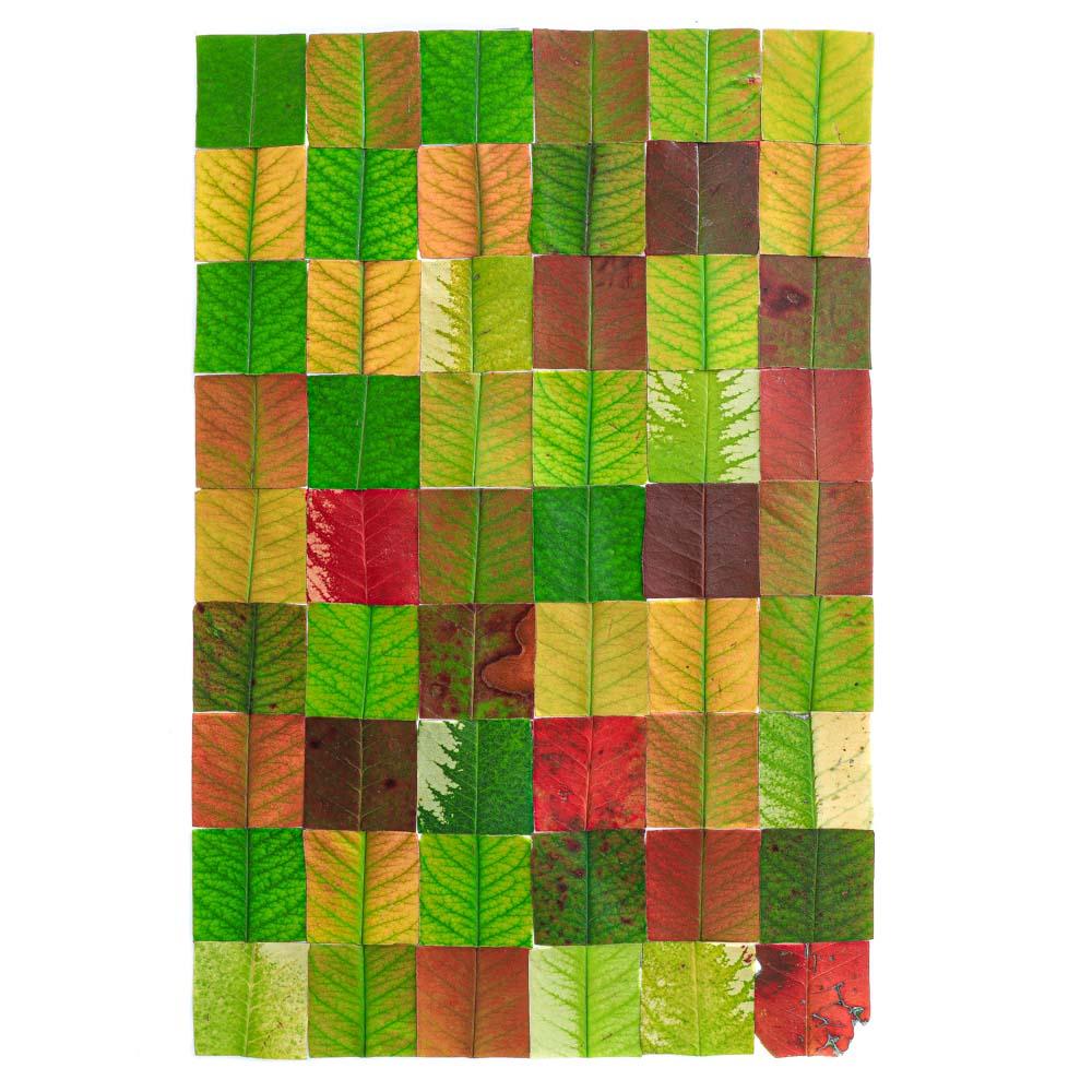1429 hojas