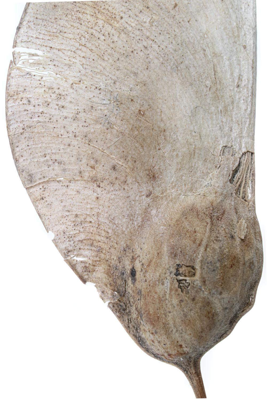 1459 samara