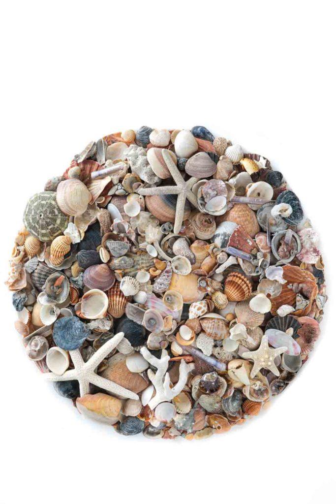 colección conchas