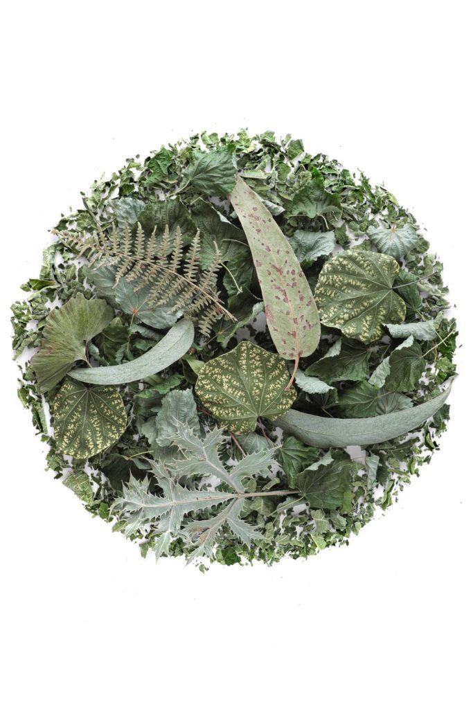 1504 coleccion hojas