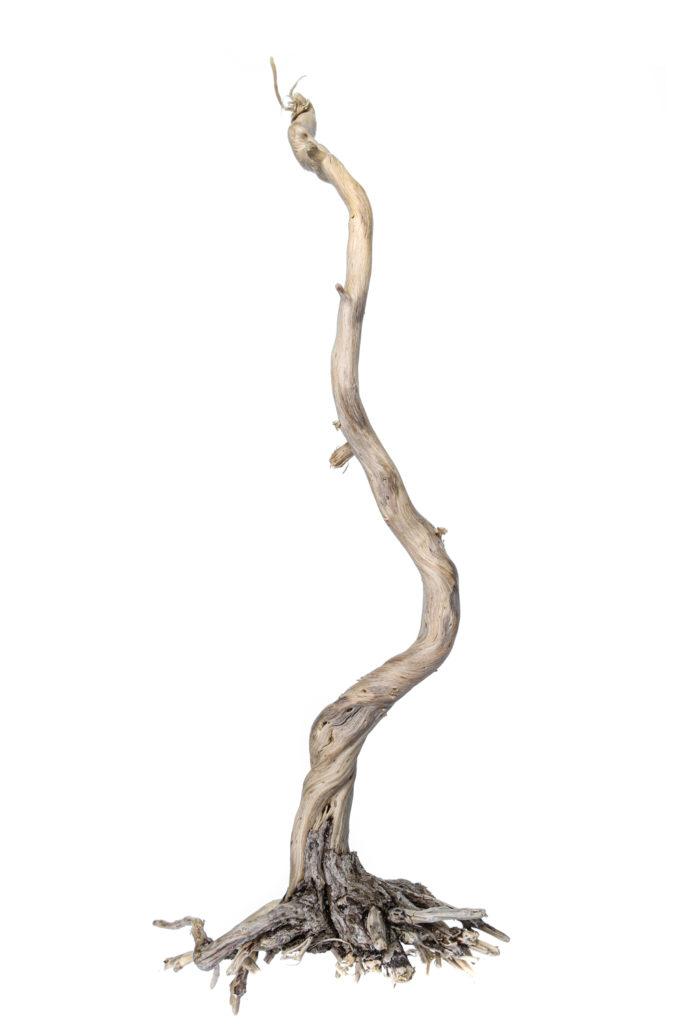 1508 árbol