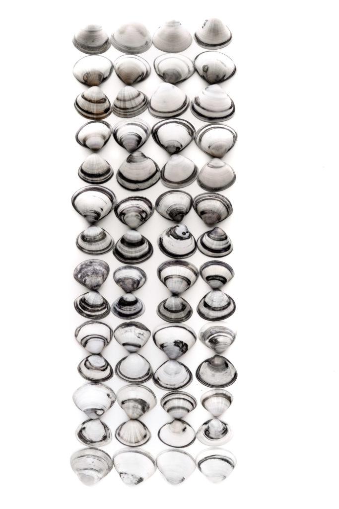 1542 conchas