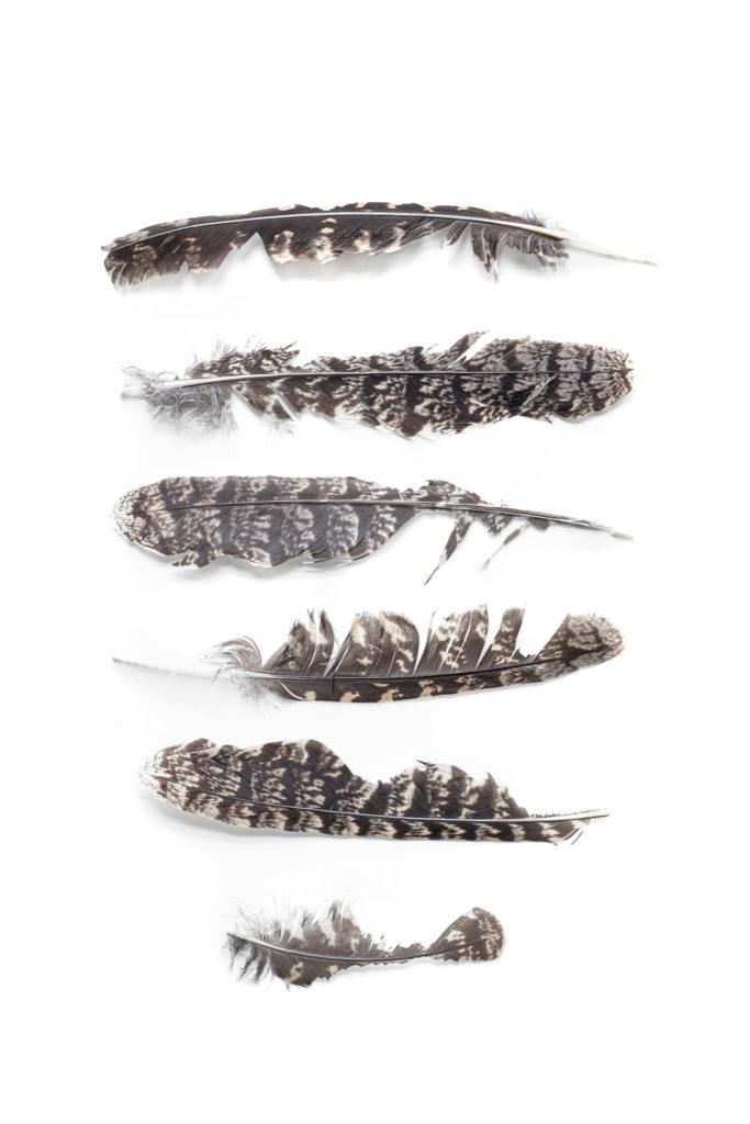 1584 plumas