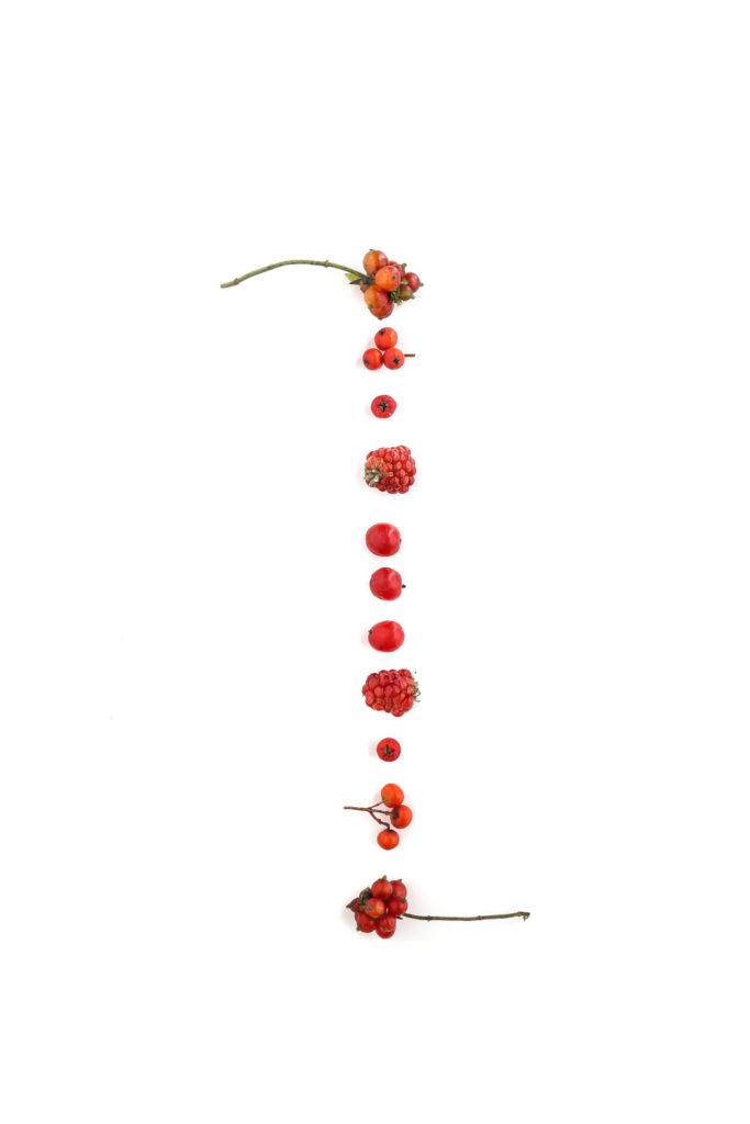 1590 frutos