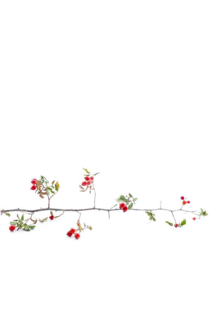 1595 rosal