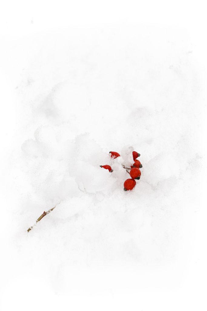 1604 nieve