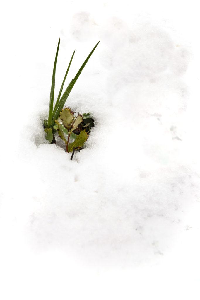 1605 nieve
