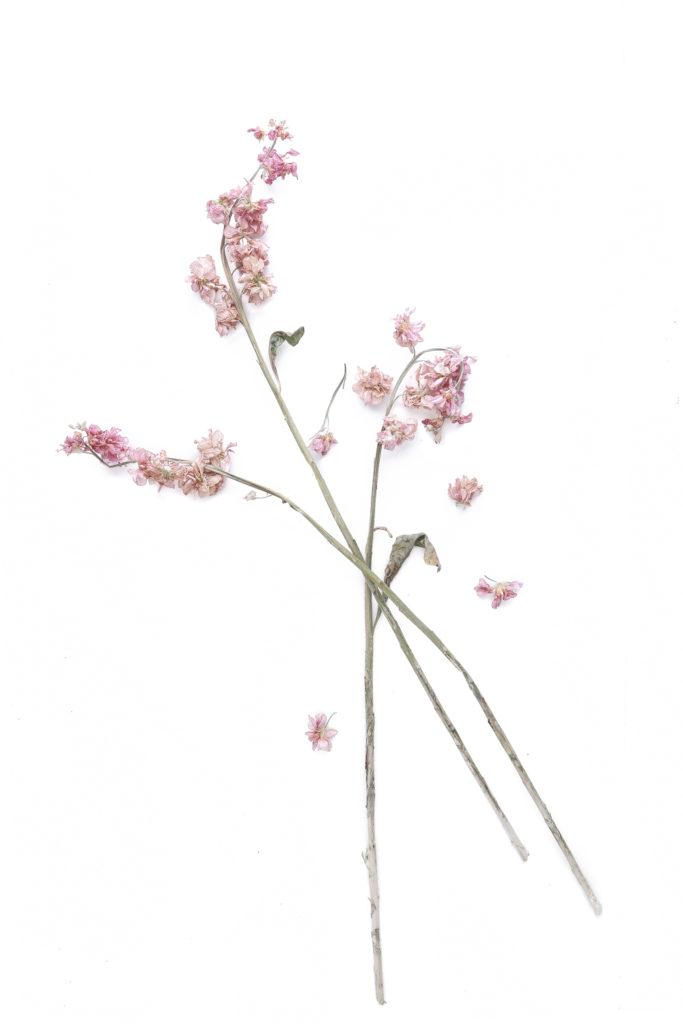 1608 florcortada