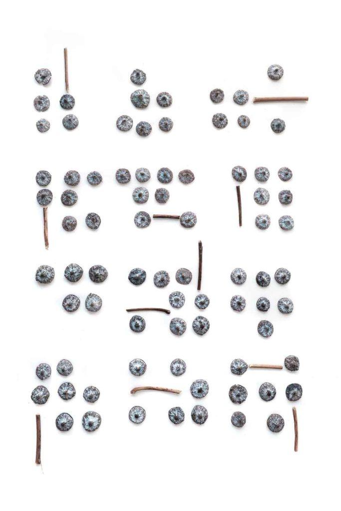 1617 opérculos