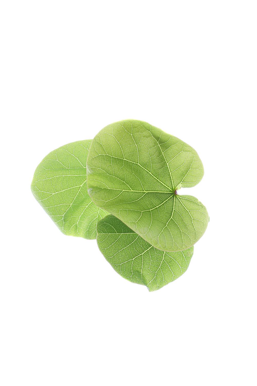 1668 hojas