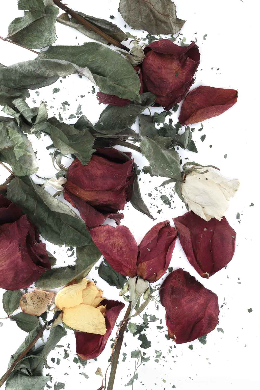 1696 rosas