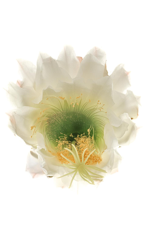 1709 cactus4