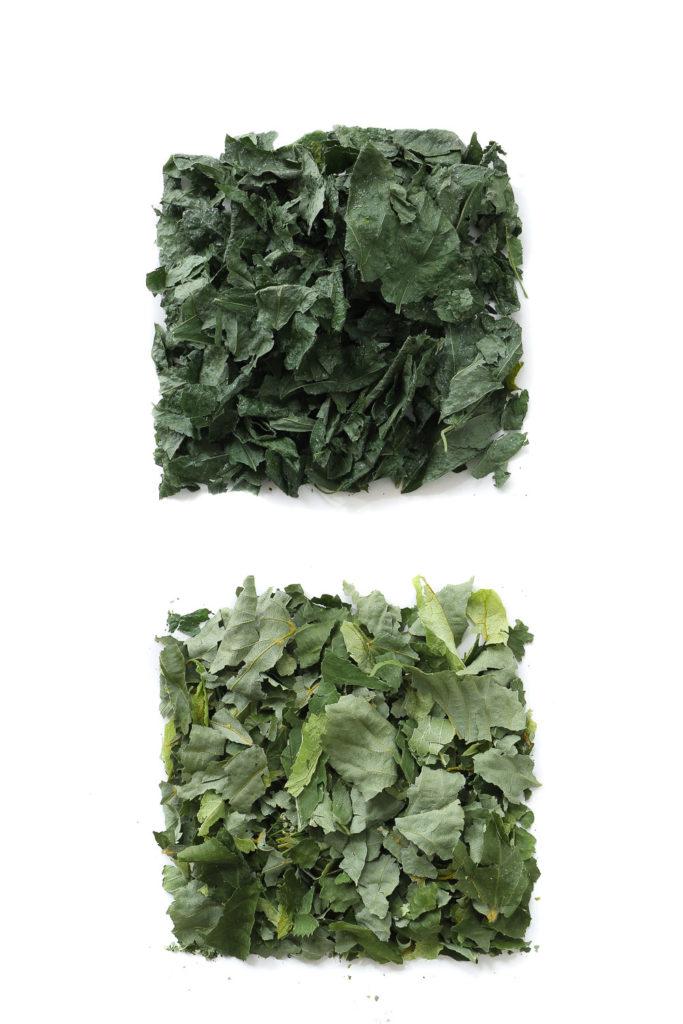 1726 hojas secas