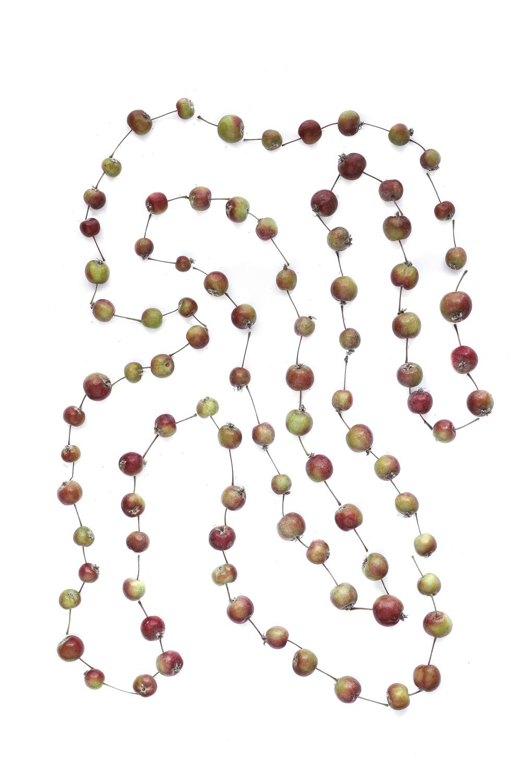 1734 manzanas