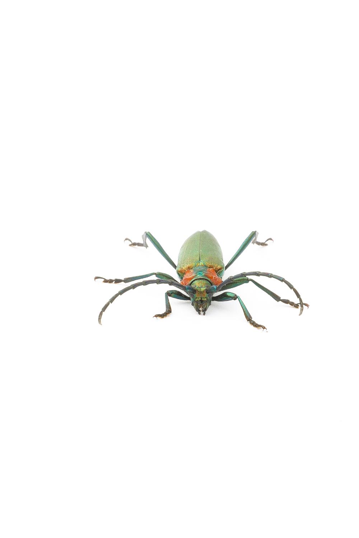 1738 escarabajo A