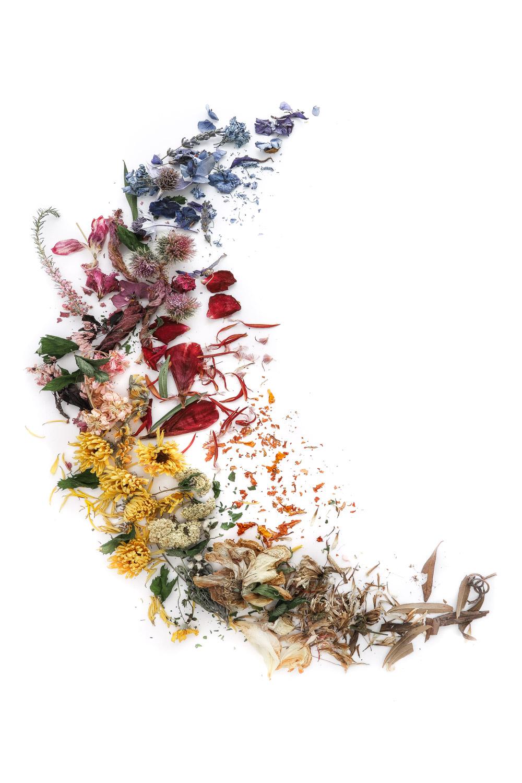 1768 flores secas