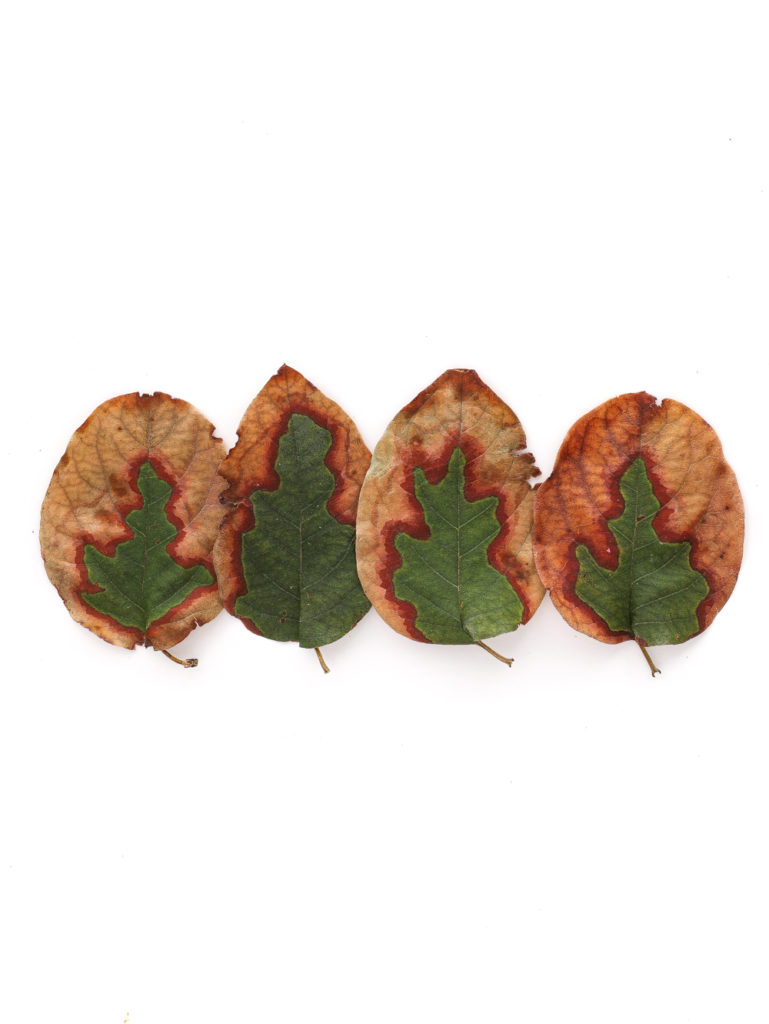 1773 hojas