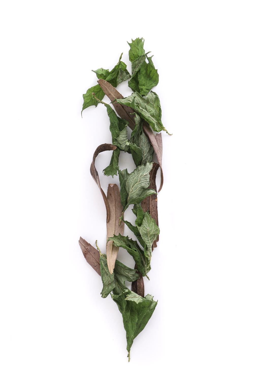 1777 hojas