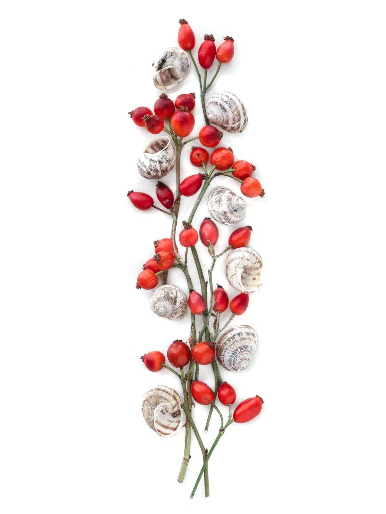 1781 caracoles