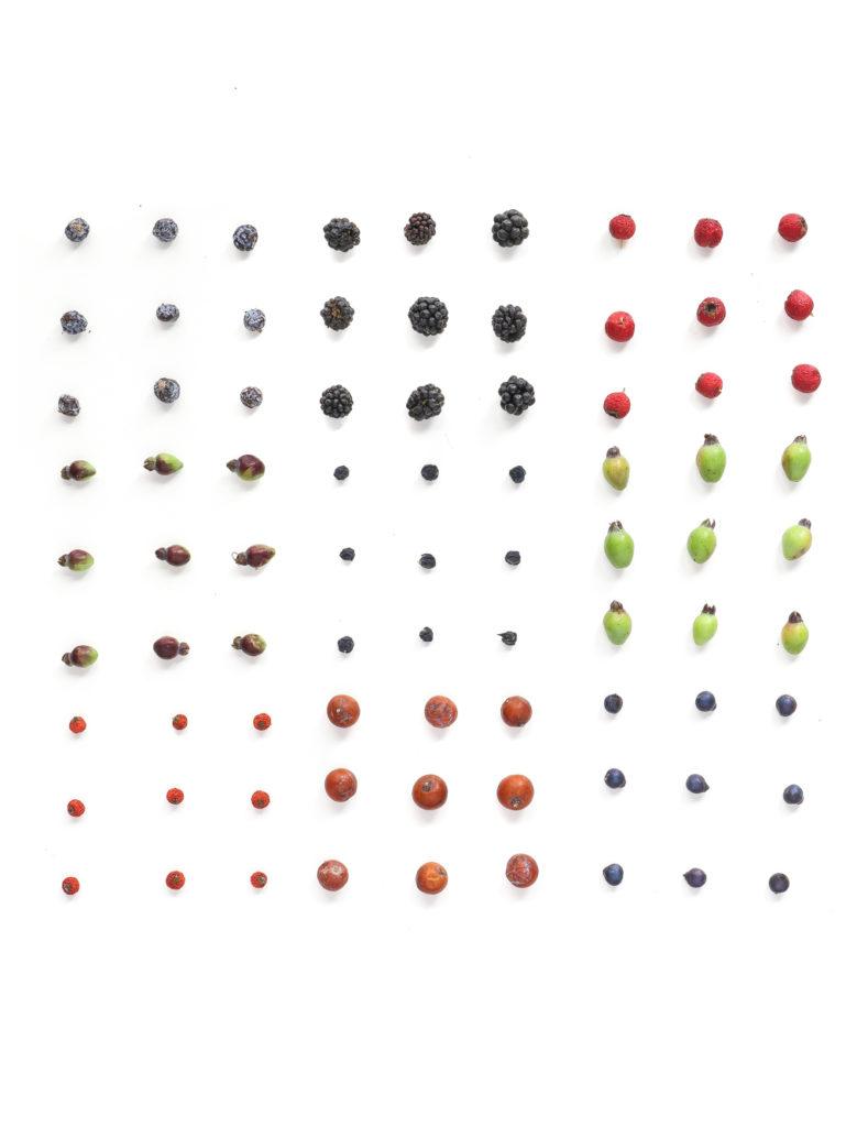 1798 frutos